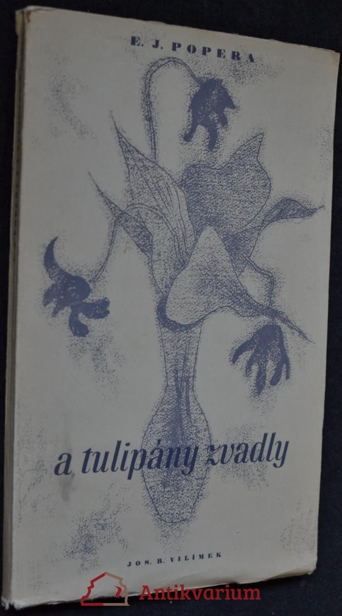 A tulipány zvadly