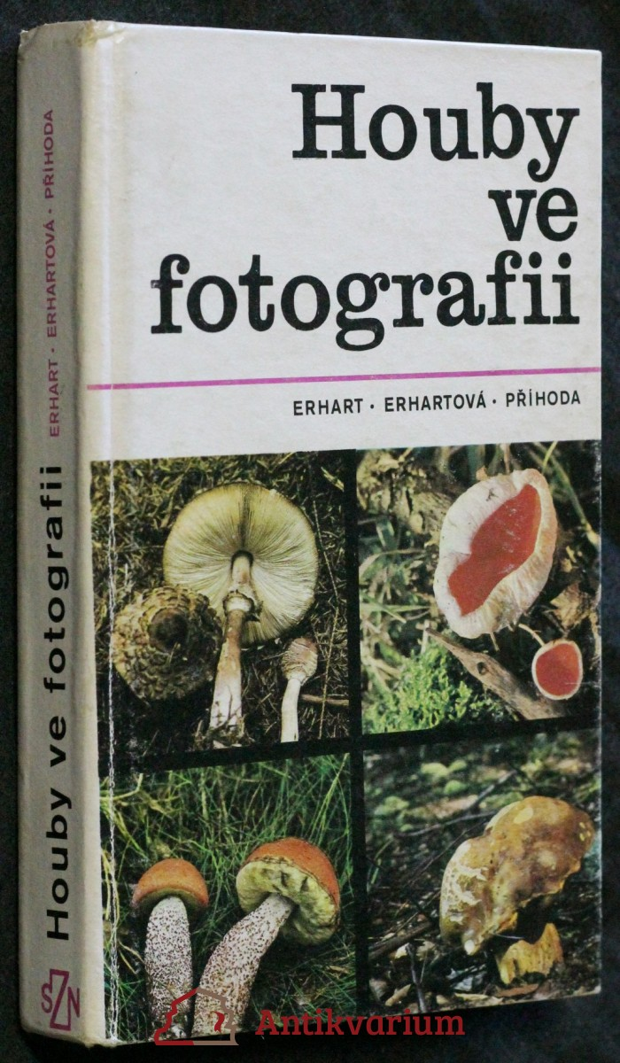 Houby ve fotografii