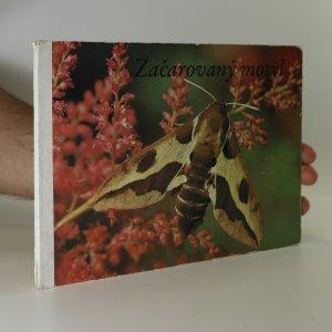 náhled knihy - Začarovaný motýl