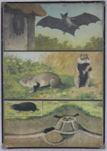 náhled knihy - starý školní plakát, netopýr, křeček, krtek