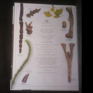 antikvární kniha Dinosaury (slovensky), 2003