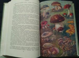 antikvární kniha Mir rastěnij (čítanka pro učitele), 1957