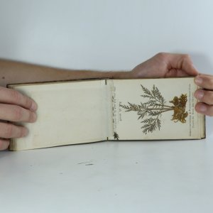 antikvární kniha Flowers of the Holy Land. Blumen des Heiligen Landes, neuveden