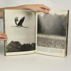 antikvární kniha Seznámení u vody, 1981
