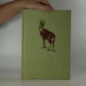 náhled knihy - Věčný hvozd